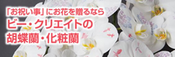 「お祝い事」にお花を贈るなら ビー・クリエイトの胡蝶蘭・化粧蘭